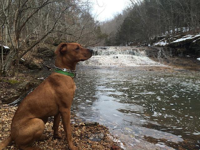 pes u řeky