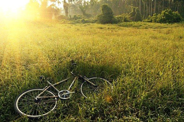 kolo v trávě