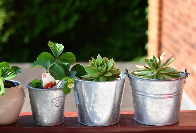 rostliny na balkon